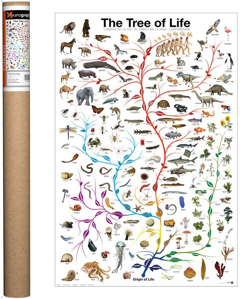 Pohon percabangan evolusi