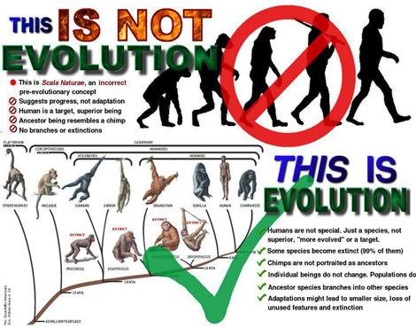 teori-evolusi