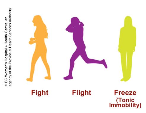 fightflightfreeze toxic relationship